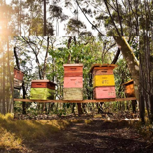 apiario-eucalipto-mel
