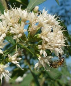 Florada Silvestre