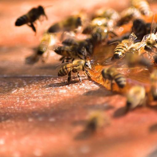 mel-puro-apiario
