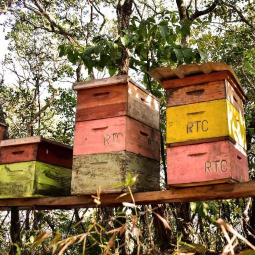 mel-puro-apiario-silvestte