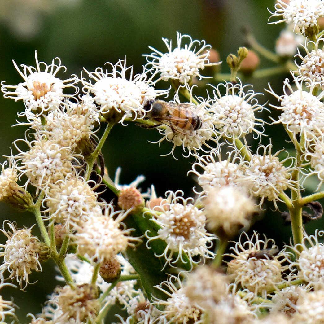 mel-abelha-puro-comprar-vender-sao-paulo-sp