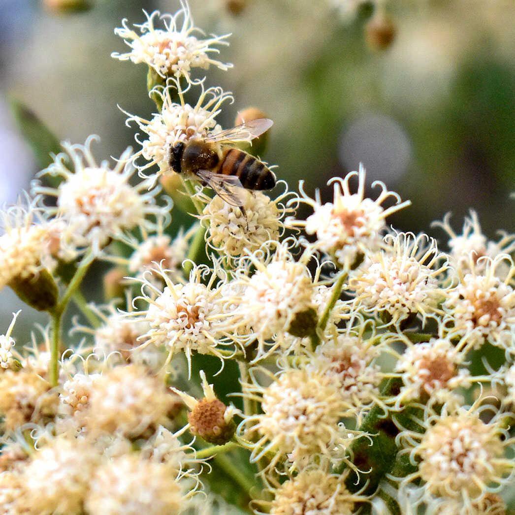 mel-abelha-puro-comprar-vender-sao-paulo-sp-