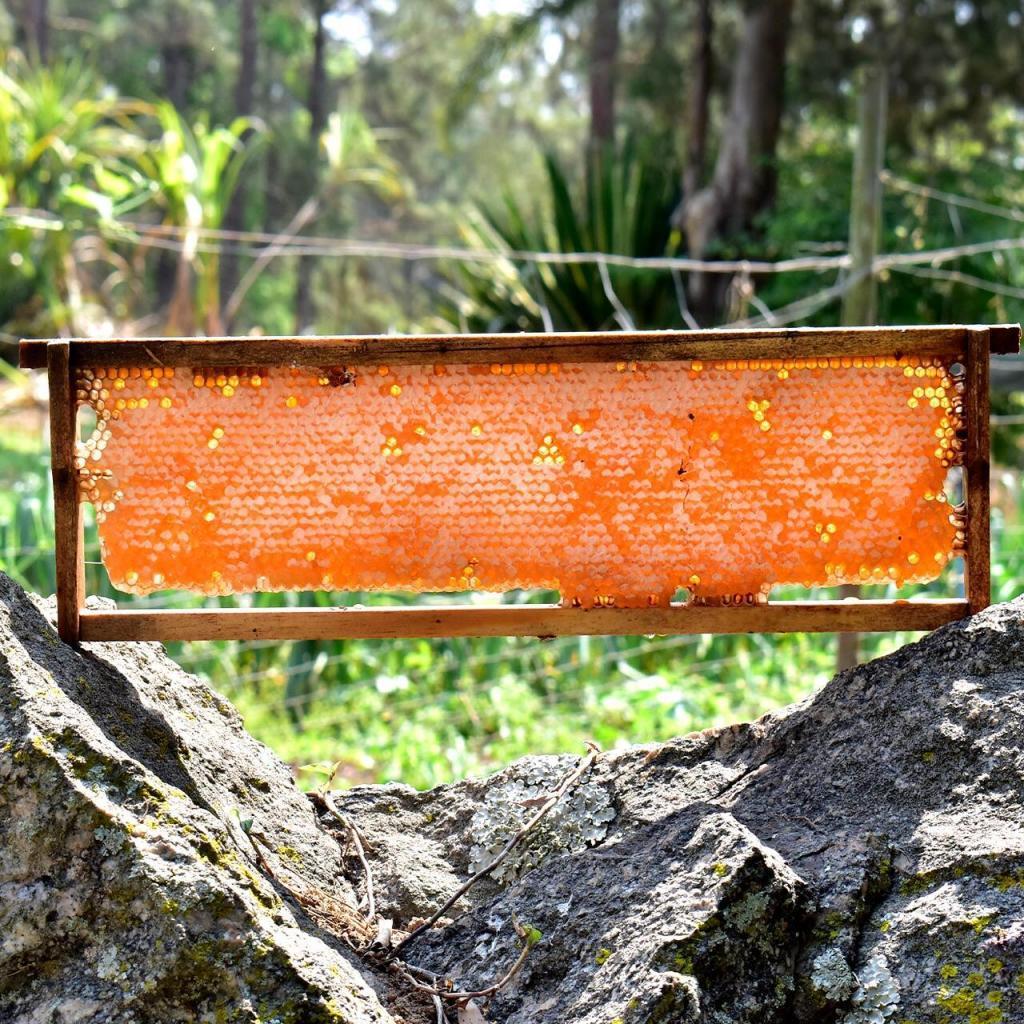 Favo de Mel: In-Natura - Direto no Quadro de Madeira (Melgueira)