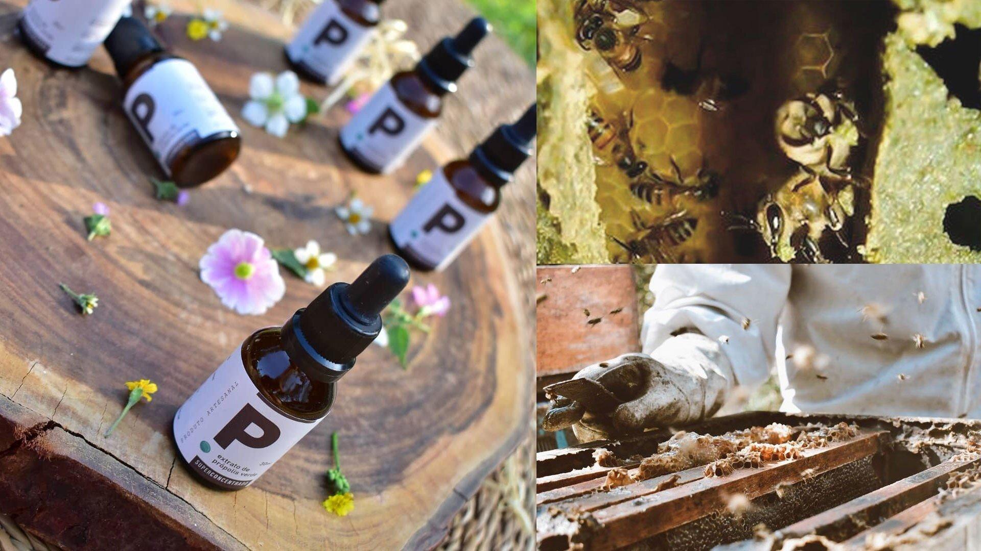 propolis - beneficios - o que é - saude - flavonoides - radicais livres - onde comprar
